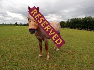 toby_reserved