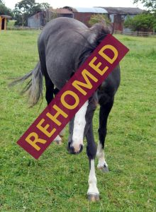 bella_rehomed