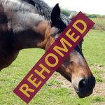 madge_rehomed_1