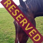paddy_reserved