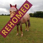 toby_rehomed_1