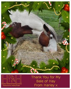 Xmas Hay Thank you