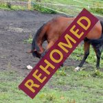 charlie_rehomed_1