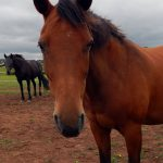 image of wendy bay mare