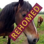Ivor has been rehomed to his new forever home