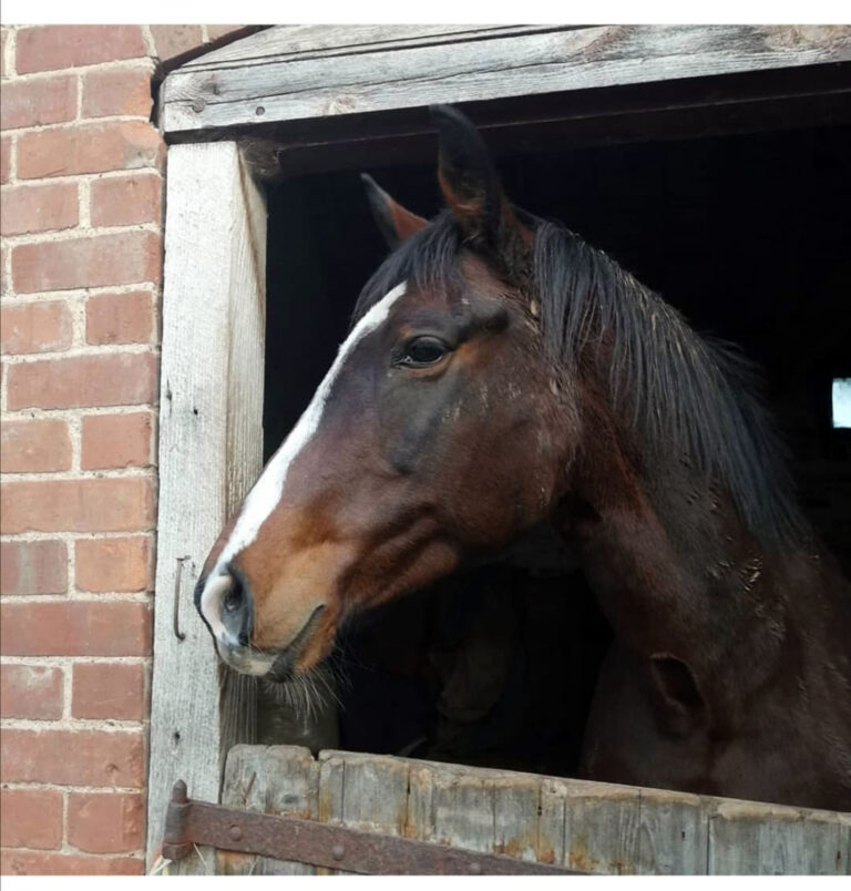 This is HRH Horse Annie who is looking for her new forever home