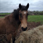This is HRH Horse Blue who is looking for his new forever home