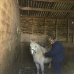 HRH Horse Dessie is looking for her new forever home