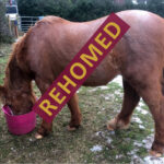 HRH Horse Merlin has found his new forever home