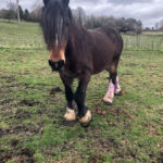 HRH Horse Kitt is looking for her new forever home