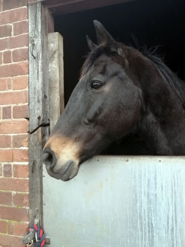 HRH Horse Luna is looking for her new forever home