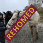 HRH Horse Luna has found his new forever home