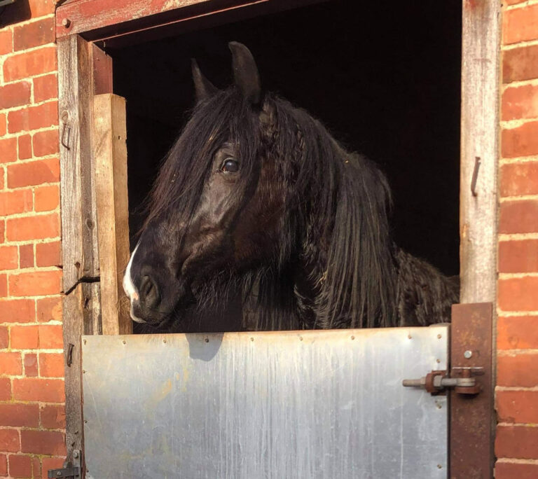 This is HRH Marlow who is looking for his new forever home