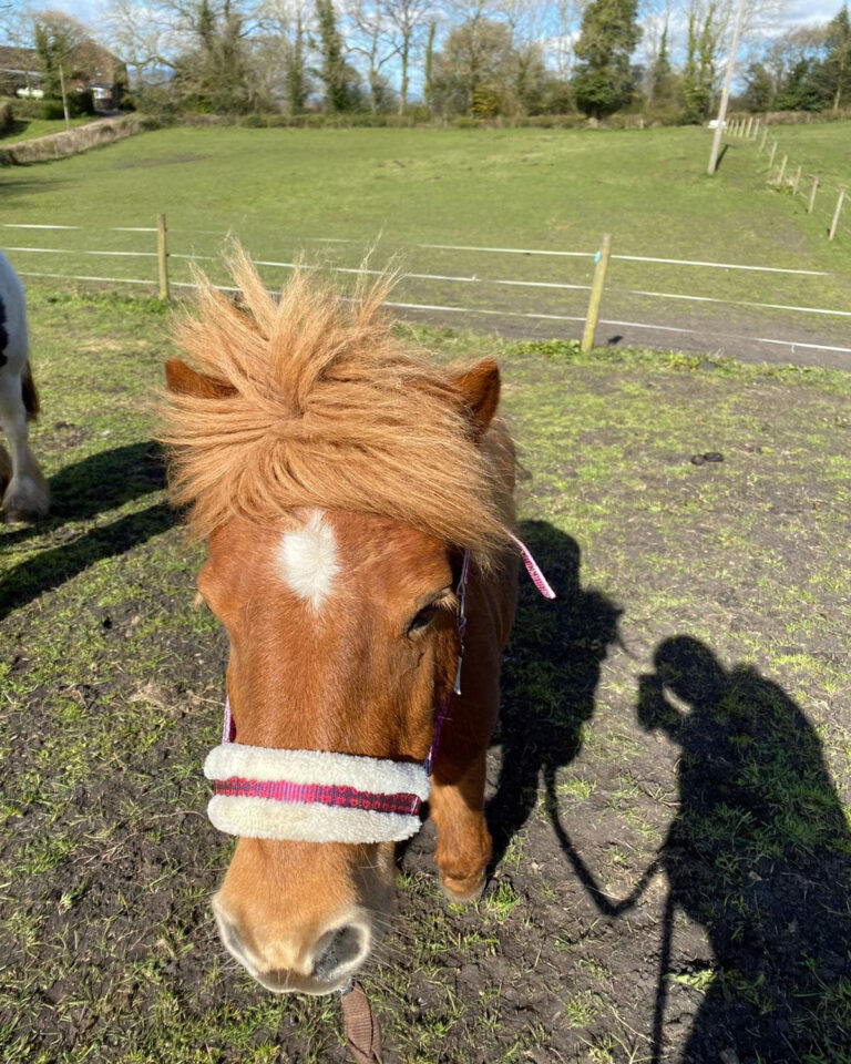 HRH Horse Tally is looking for her new forever home