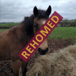 HRH Horse Blue has found his new forever home