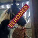 HRH Horse Rocky has found his new forever home