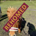 HRH Horse Tally has found her new forever home