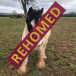 HRH Horse Albert has found his new forever home