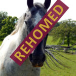 HRH Horse Trio has found his new forever home