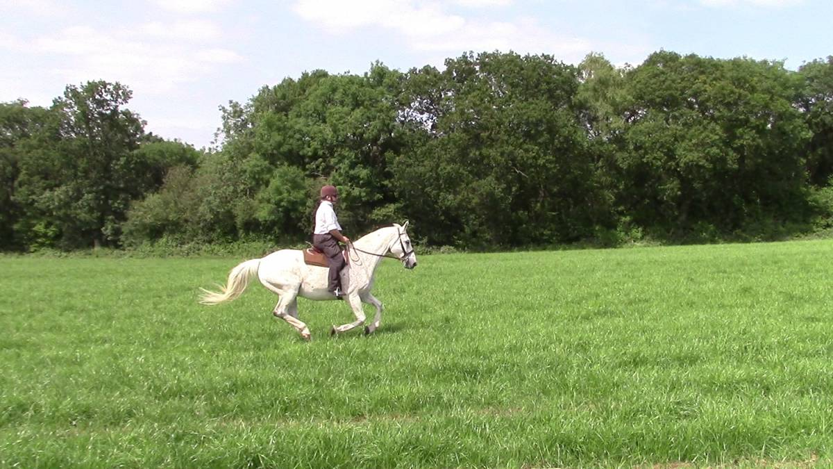 cantering_horse